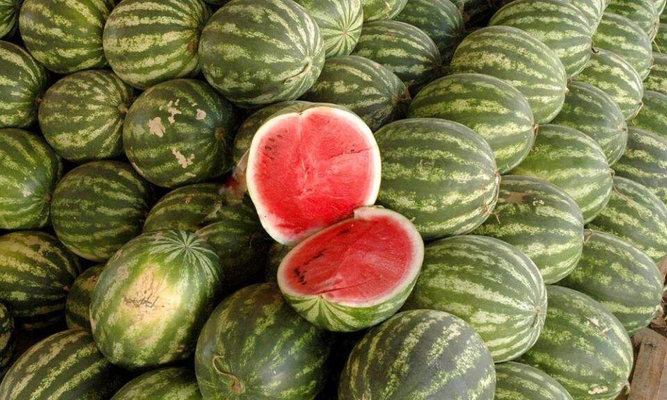 Benefícios da melancia – Como consumir, efeitos positivos e mitos