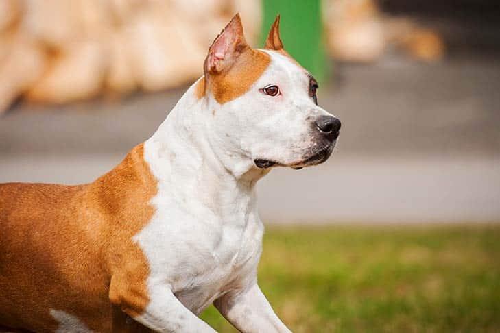 Cachorro mais caro do mundo - filhote de luxo chegou a preço milionário