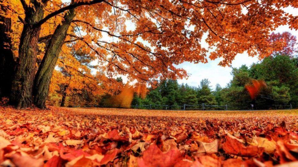 Características do outono, quais são? Principais diferenças entre os hemisférios