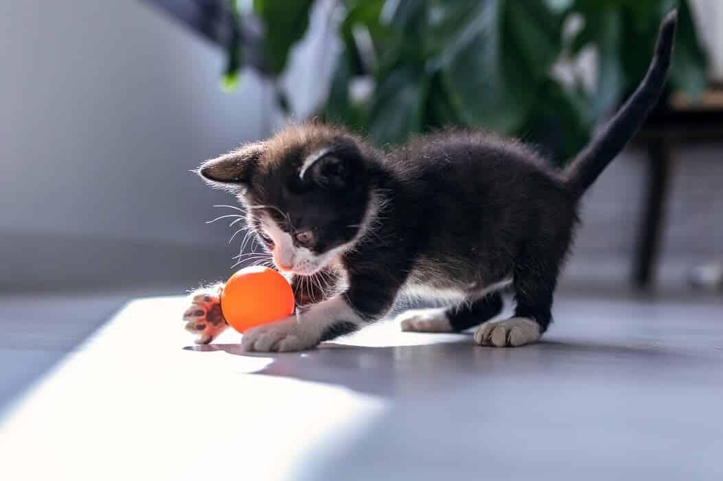 Imagem de um felino brincando com uma bola para ilustração do item