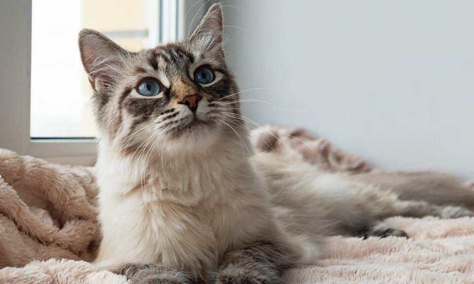 Como adestrar gatos? Benefícios, ferramentas e dicas práticas