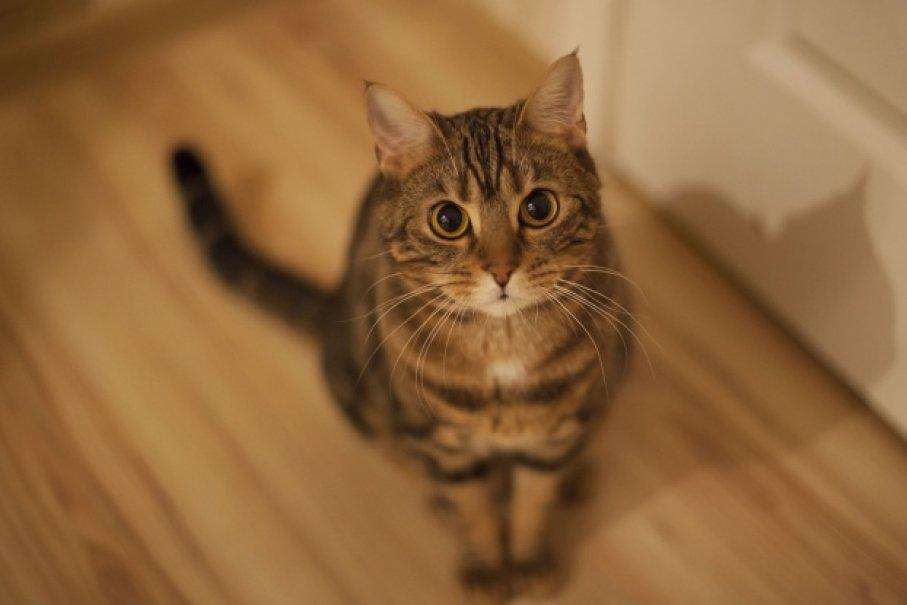 Fotografia de um felino sentado para ilustração do item