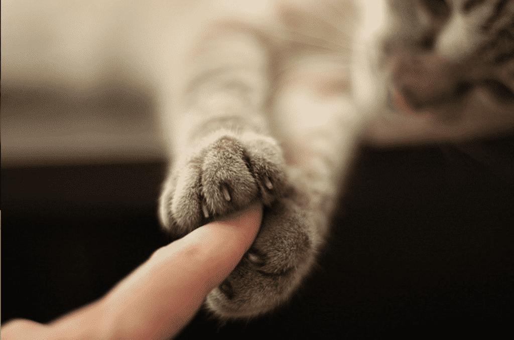 Imagem de um felino segurando o dedo de uma pessoa entre as patas para ilustração deste item