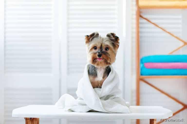 Fotografia de um cãozinho sendo secado para ilustração do item