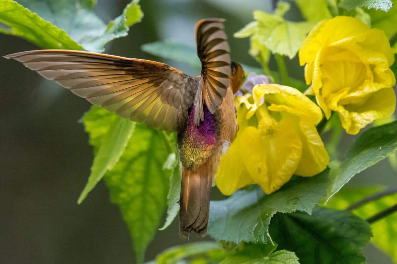 Curiosidades sobre o beija-flor - tudo sobre a menor ave do mundo