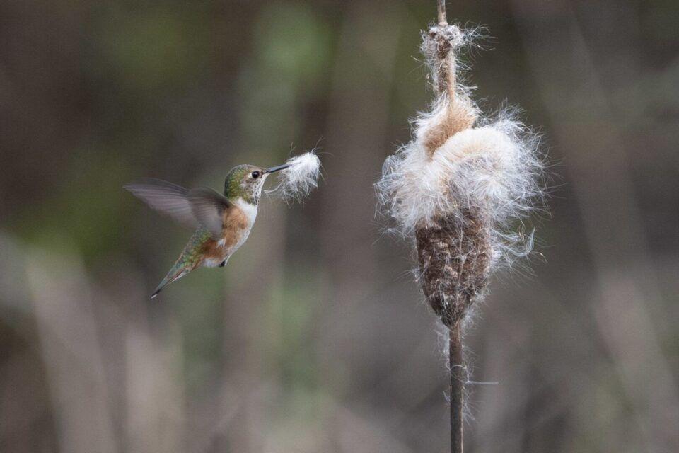 Curiosidades sobre o beija-flor, a menor ave do mundo