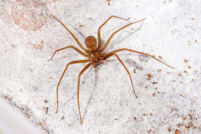 Espécies de aranha, quais são? Hábitos e principais características