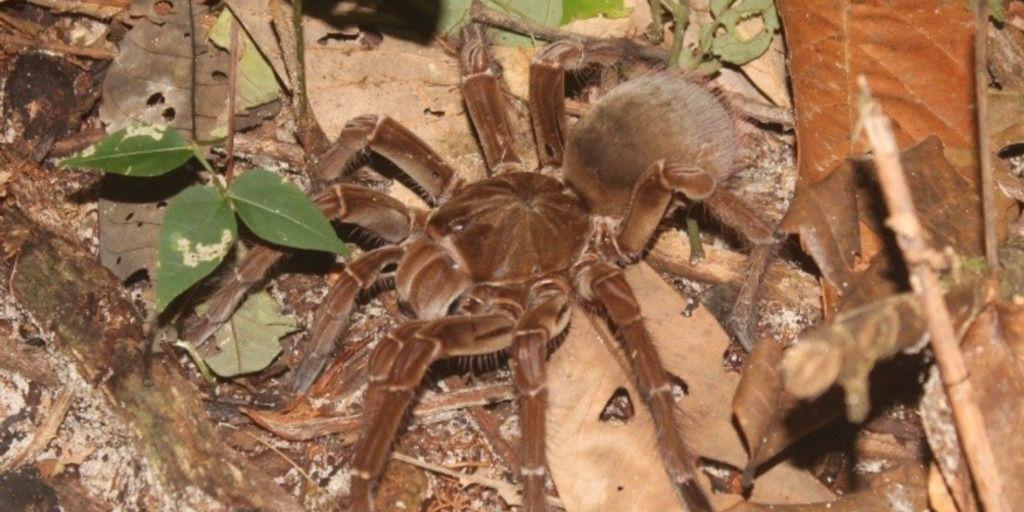 Imagem da espécie citada anteriormente, para ilustração da explicação dada no item da lista