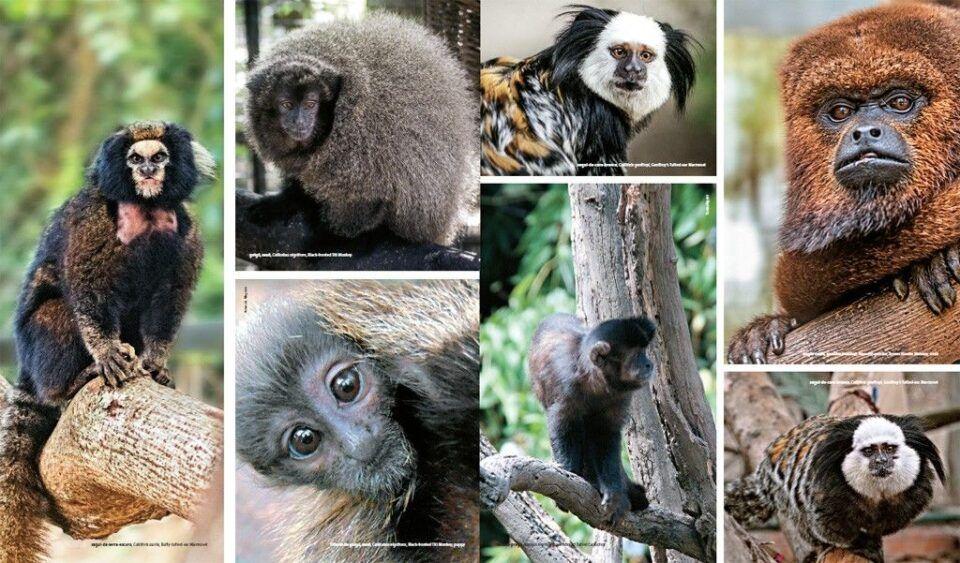 Espécies de macaco – Importância para o equilíbrio do meio ambiente