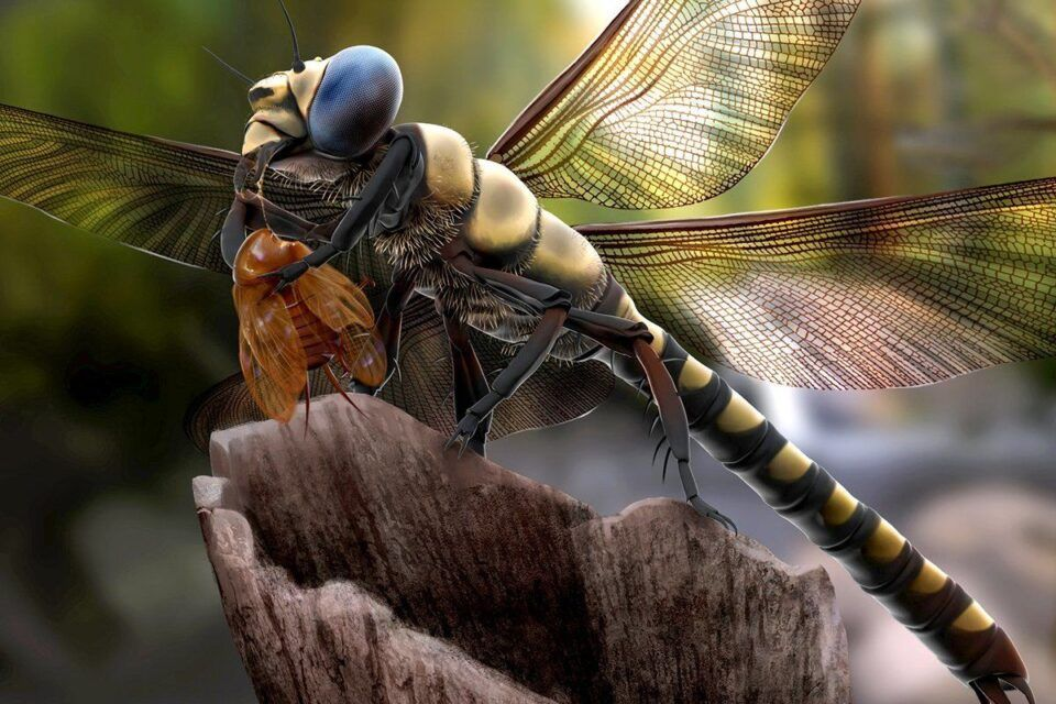 Insetos gigantes – Principais exemplares de criaturas do passado