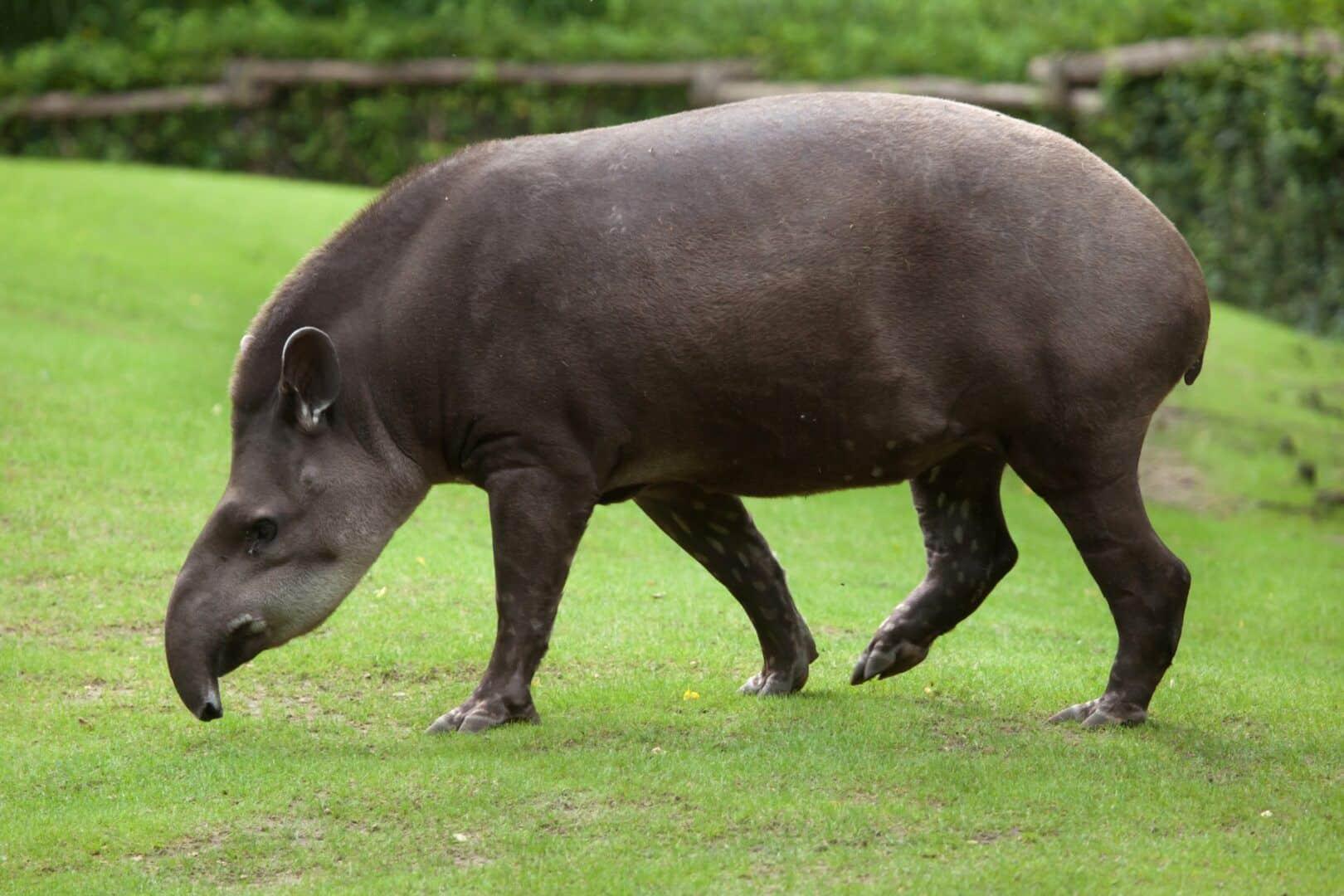 Maior mamífero do mundo - as maiores espécies conhecidas pela ciência