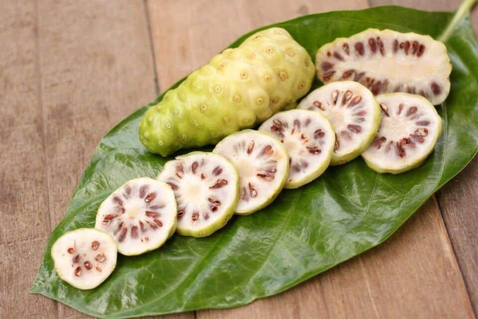 Noni – Benefícios e efeitos colaterais da fruta proibida no Brasil