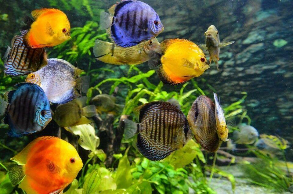 Peixes mais caros do mundo – 11 espécies de milhares de dólares
