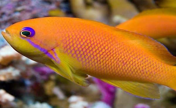 Peixes mais caros do mundo - 11 espécies de alguns milhares de dólares