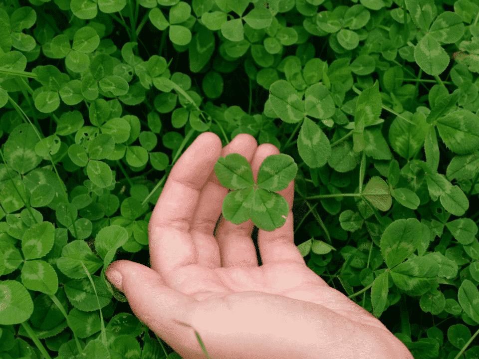 Trevo de quatro folhas – Porque a planta é considerada amuleto de sorte?