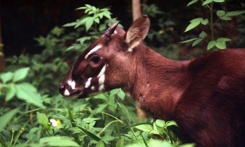 Unicórnios de verdade - conheça animais reais que pertencem ao grupo