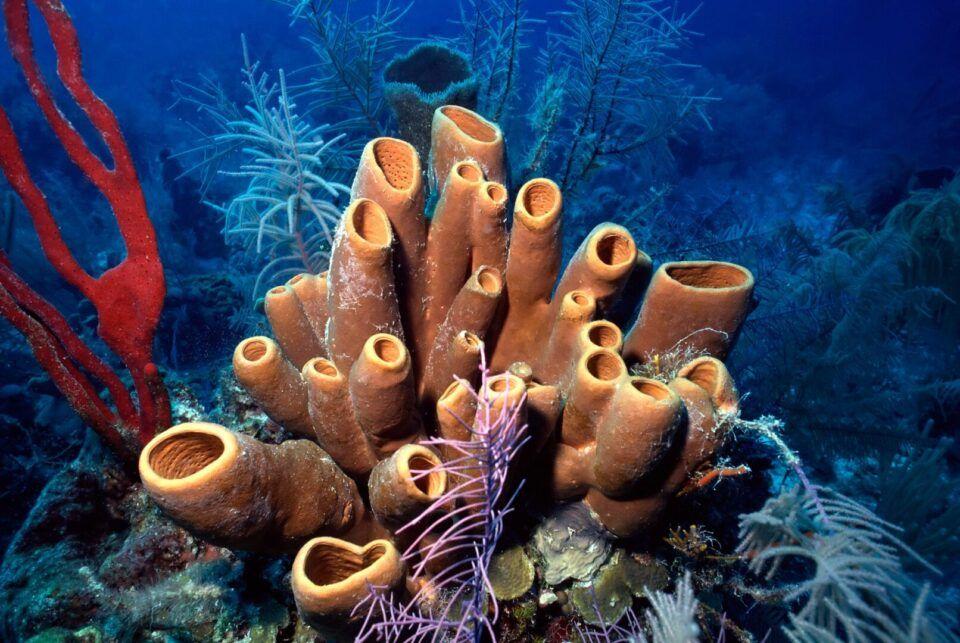 Esponjas-do-mar, o que são? Origem e importância para a vida marinha
