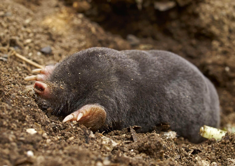 Mamíferos venenosos - 5 animais que você provavelmente não conhece