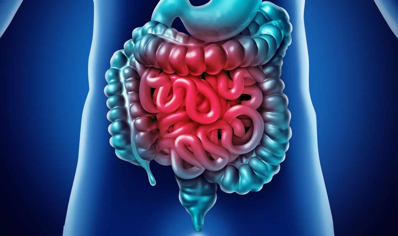 para que serve glutamina o que e e principais beneficios para o corpo 2