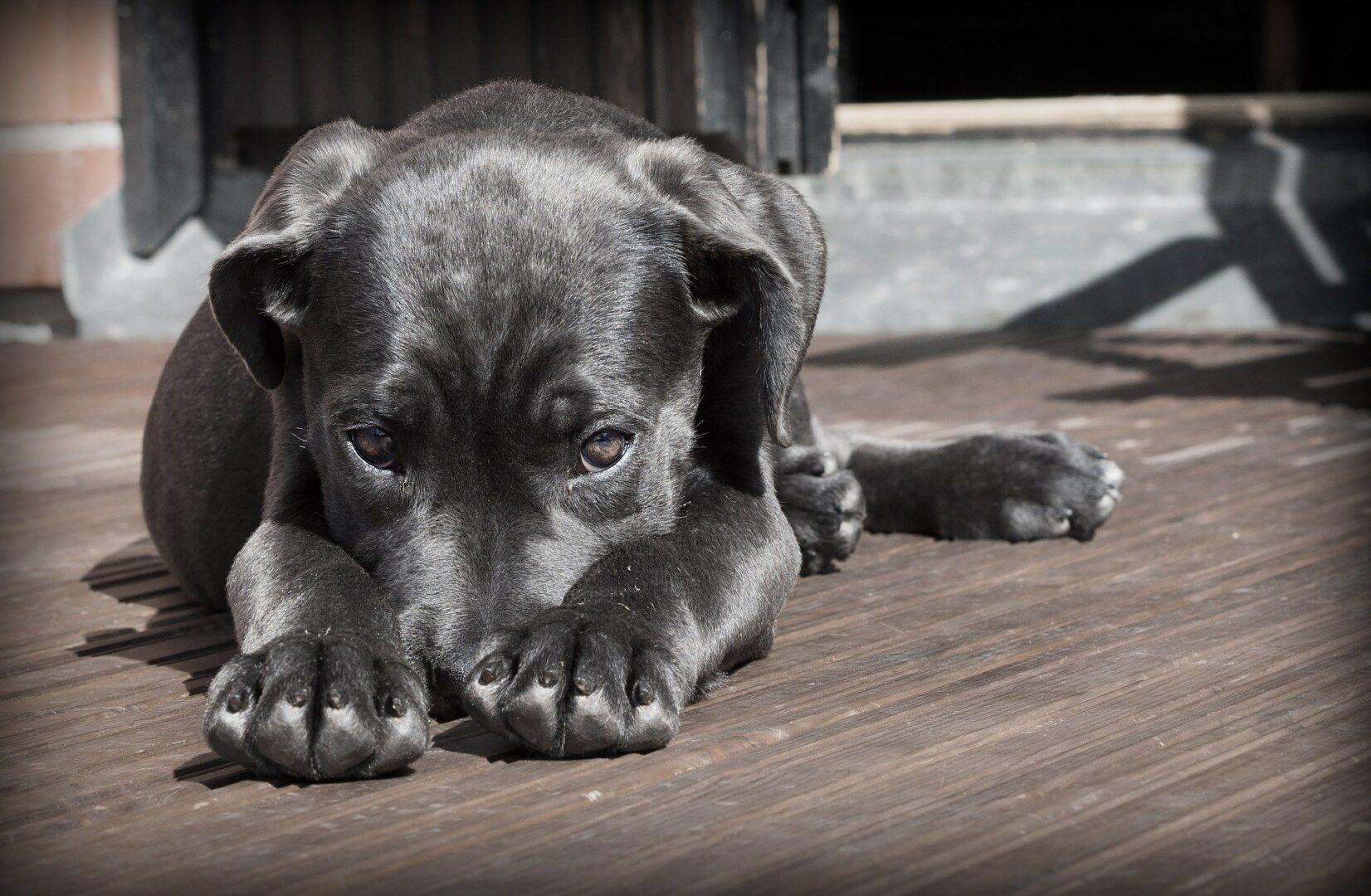 Patas de cachorro, como cuidar? Função, dicas e curiosidades