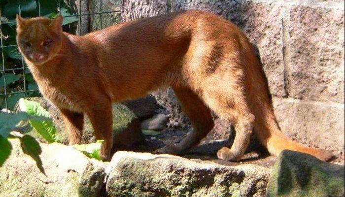 Tipos de Felinos: principais espécies encontradas no mundo
