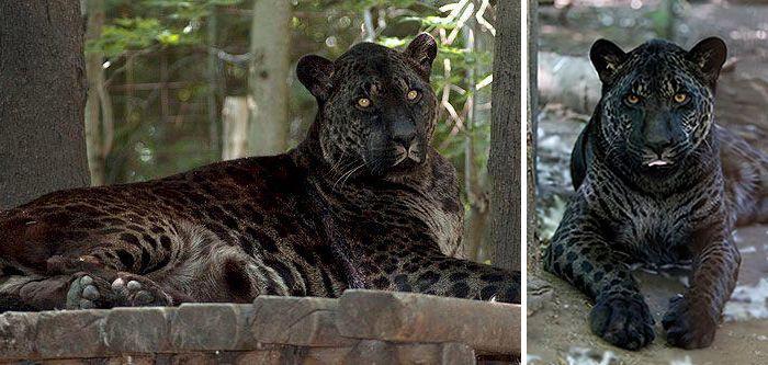 Animais híbridos - o que são e principais espécies conhecidas