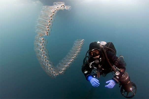 Animais transparentes - 24 criaturas quase invisíveis do mundo animal