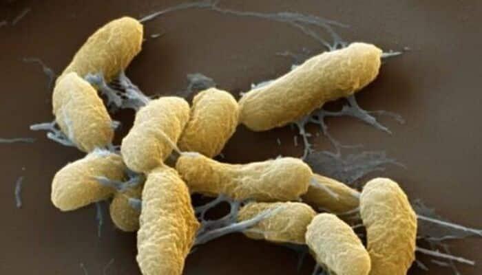 Doenças antigas: saiba quais as mais contagiosas e mortais da história