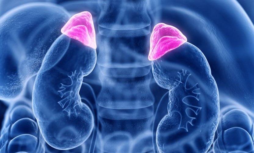 Efeitos da adrenalina - principais reações e funções do hormônio no corpo