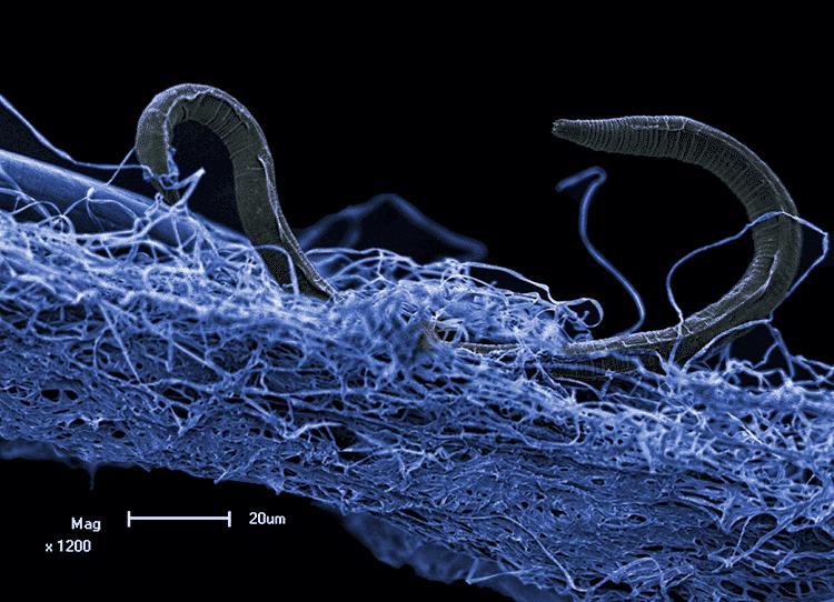 Intraterrestres - mitos e fatos científicos sobre a vida debaixo da Terra