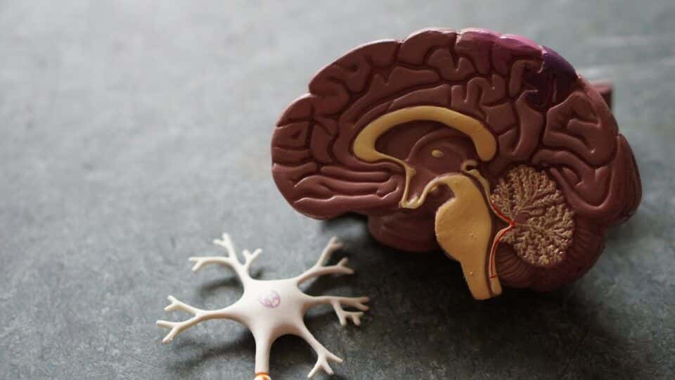 O que é Alzheimer? Principais sintomas, causas e formas de tratamento