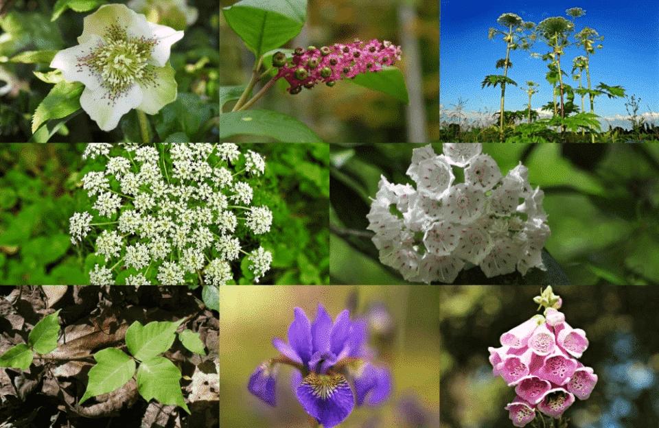 Plantas Venenosas – Definição, espécies e níveis de toxicidade