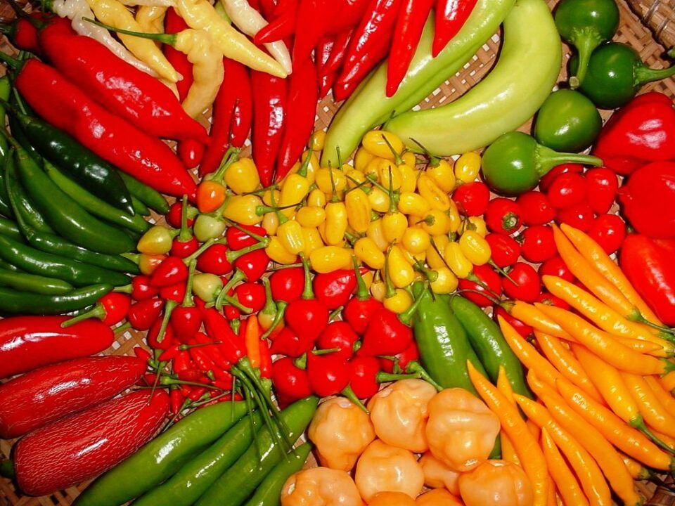 Por que a pimenta arde – Causas, componentes e benefícios da pimenta