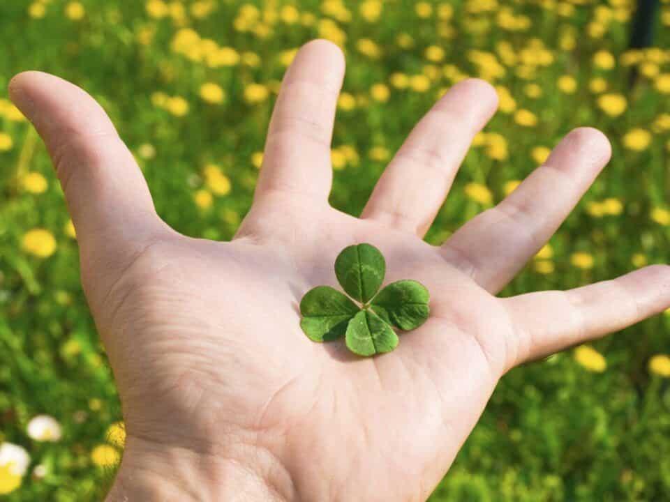 Trevo da sorte – História e curiosidade sobre o trevo de quatro folhas