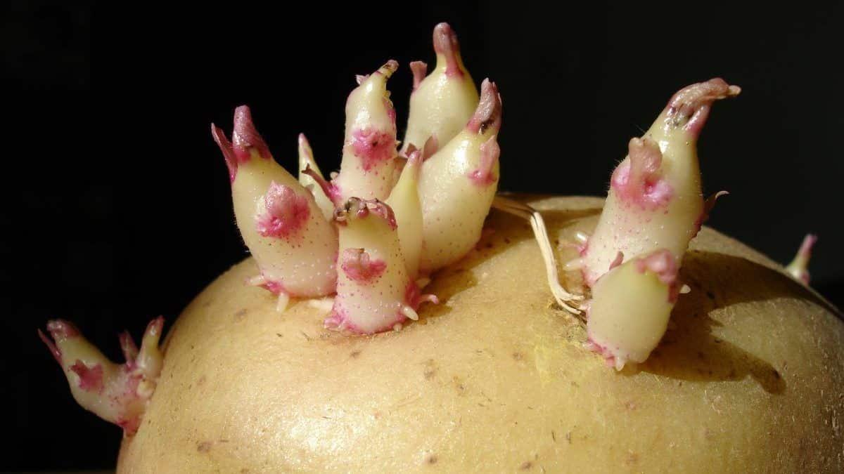 Comida estragada - principais sinais de contaminação dos alimentos