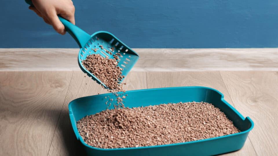 Como limpar a caixa de areia do gato: Dicas importantes e passo a passo