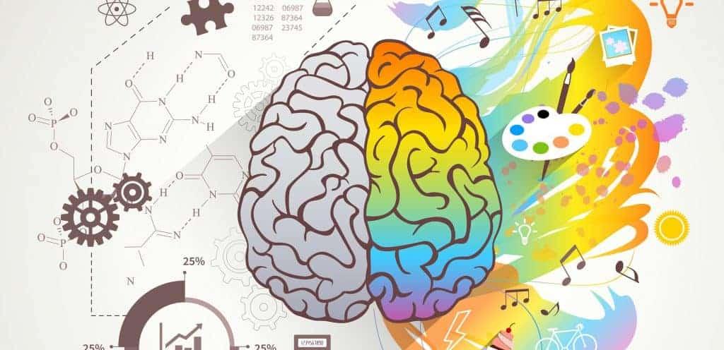 Hemisférios do cérebro: o que a Ciência tem a dizer sobre isso?