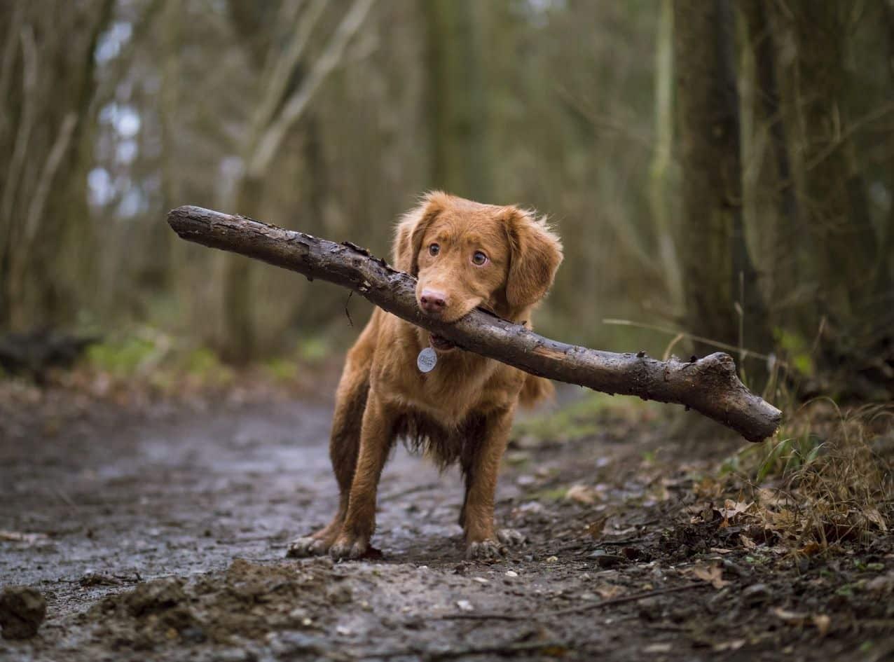 Nomes para cachorro fêmea - centenas de sugestões para você se inspirar