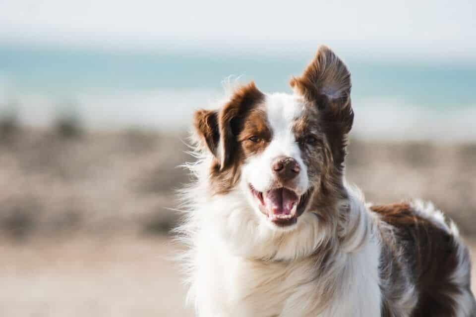 Nomes para cachorro fêmea: centenas de sugestões para você se inspirar