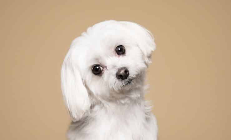 Nomes para cachorro - mais de 2 mil sugestões para ajudar na escolha