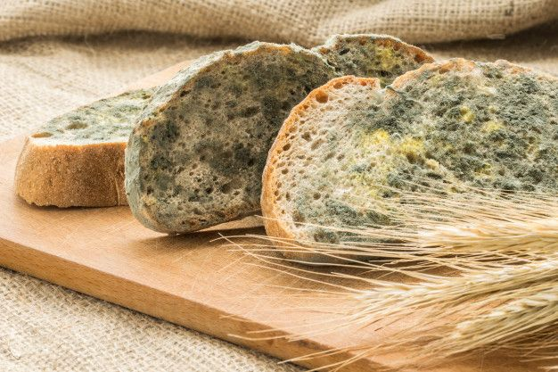 Pão mofado: o que é, como lidar e por que não comer