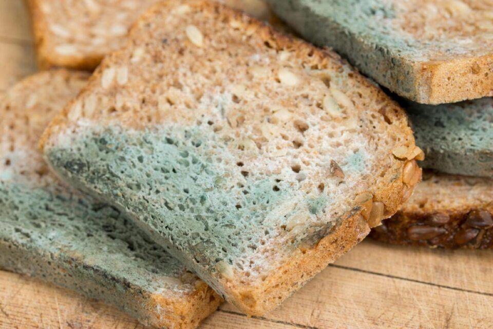 Pão mofado, o que é? Como lidar e por que não comer