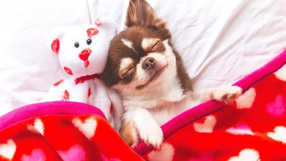 Cachorros sonham? Importância do sono para a saúde do pet