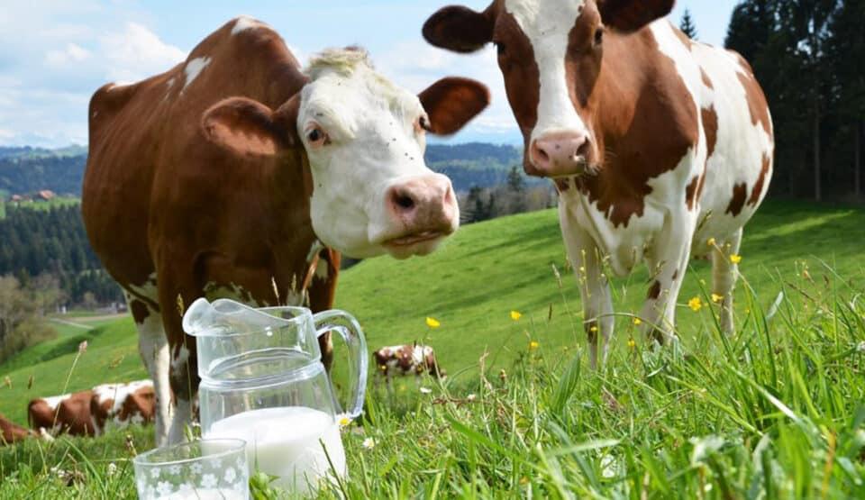 Leite de vaca: composição e benefícios do alimento