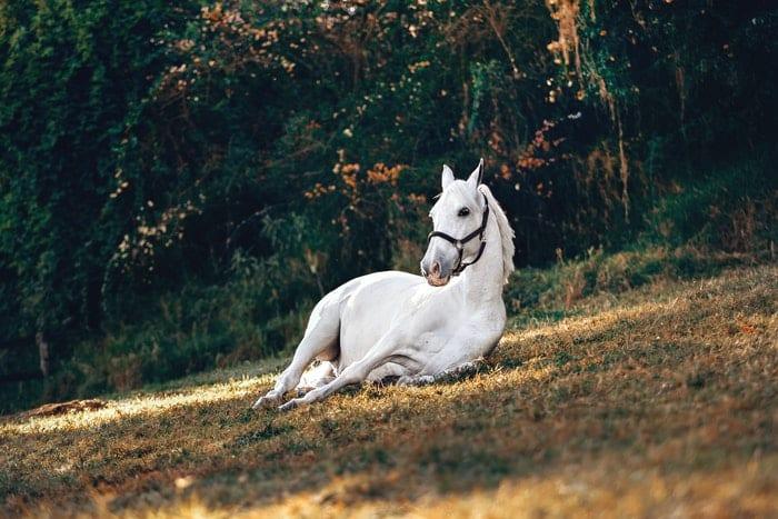 Cavalo dorme em pé? Veja se é verdade e por que isso acontece