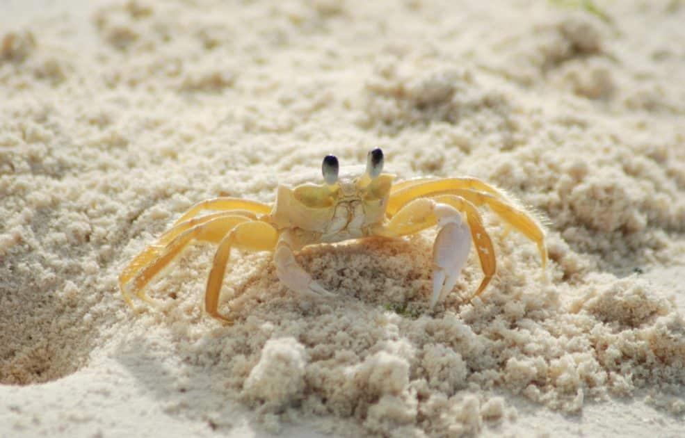 Diferença entre siri e caranguejo: qual é e como identificar?