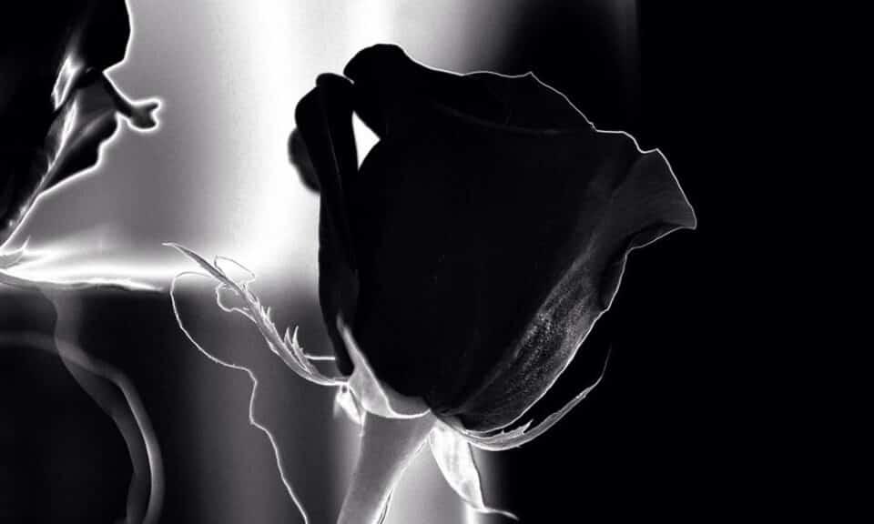 Conheça os tipos de flor preta: as espécies mais bonitas e misteriosas