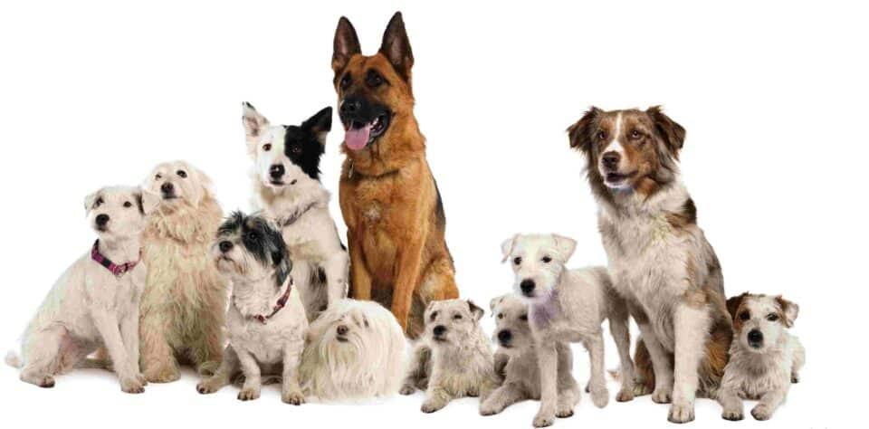 Nomes diferentes para cachorros: os 1183 mais criativos e diferentes