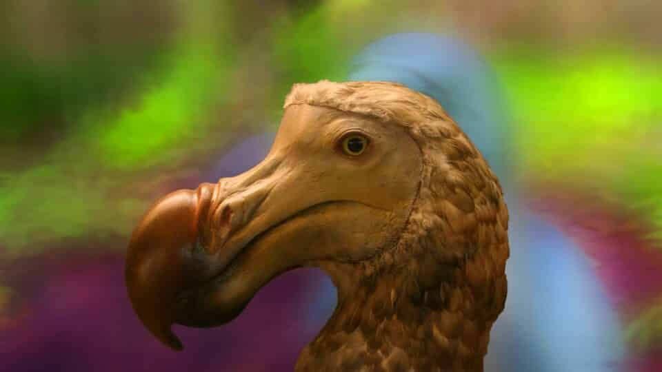 Pássaro dodô: principais características e como a ave foi extinta
