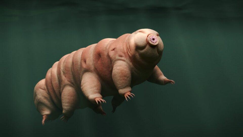Animal mais resistente do mundo, qual é? Características e curiosidades